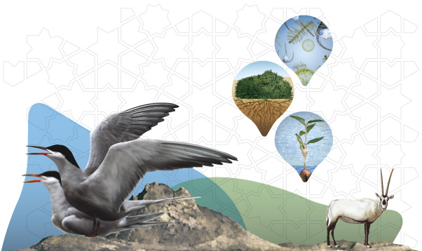 The transition from offshore waters to the highest inland summit provides a profile through the Emirate of Abu Dhabi of a series of diverse landscapes with unique habitats and ecosystems, both terrestrial and marine. Although quite distinct, they are interlinked through an intricate and complex web of life. This interconnected web includes a remarkable diversity of species of flora and fauna that have evolved in response to challenging environmental conditions.